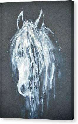White Horse Portrait 1 - By Diana Van Canvas Print by Diana Van