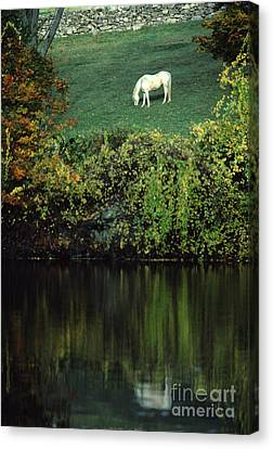 White Horse Reflected In Autumn Pond Canvas Print by Anna Lisa Yoder