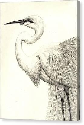 White Ibis Canvas Print by Aurora Jenson