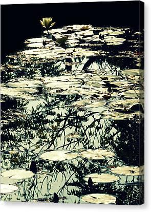 White Lotus Canvas Print by Danny Van den Groenendael