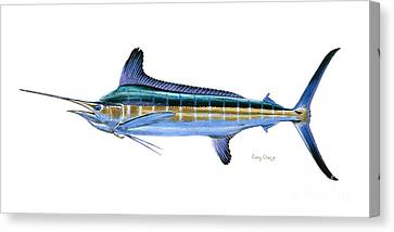 White Marlin Canvas Print by Carey Chen