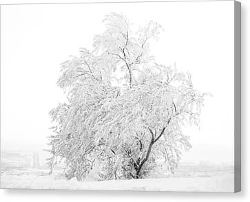 White On White Canvas Print by Marilyn Hunt