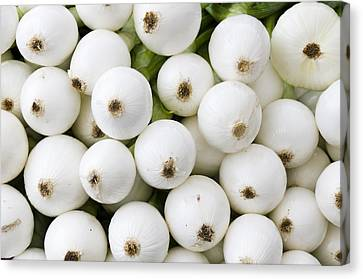 White Onions Canvas Print by John Trax