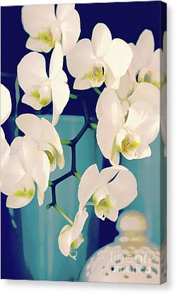 White Orchids In Turquoise Vase Canvas Print by Carol Groenen