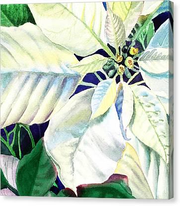 White Poinsettia Plant Canvas Print by Irina Sztukowski