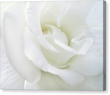 White Rose Angel Wings Canvas Print by Jennie Marie Schell