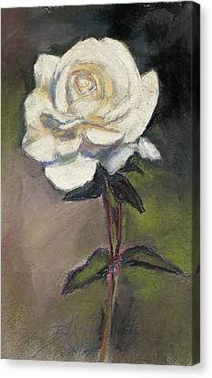 White Rose Of Love Canvas Print by Billie Colson