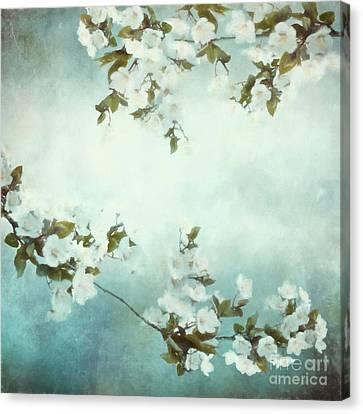 White Sakura Blossoms Canvas Print by Shanina Conway