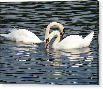 White Swans Canvas Print by Joyce Woodhouse