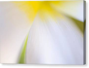 White Tulip Detail Canvas Print by Silke Magino