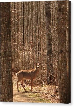 Whitetail Deer Buck Canvas Print by Jim Sauchyn