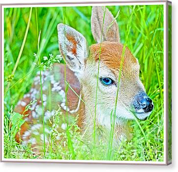 Canvas Print featuring the photograph Whitetailed Deer Fawn by A Gurmankin