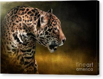Who Goes There Canvas Print by Lois Bryan