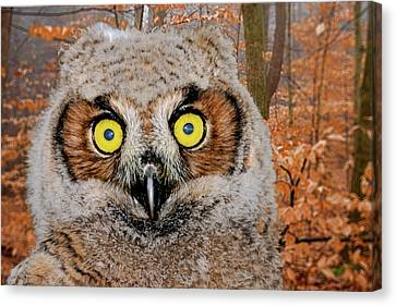 Who Me Canvas Print by Jack R Perry