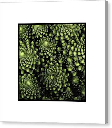 Wild And Wonderful Canvas Print by Andrea Kollo