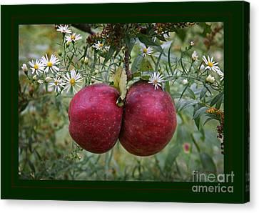 Wild Apples Canvas Print by John Stephens