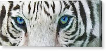 Wild Eyes - White Tiger Canvas Print by Carol Cavalaris