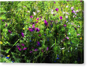 Wild Flowers In The South Of France Canvas Print by Georgia Fowler
