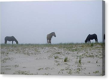 Wild Horses In The Sand Dunes On Sable Canvas Print by Justin Guariglia
