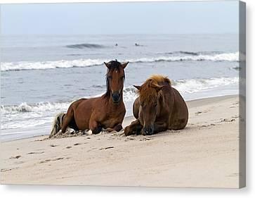 Wild Horses Of Assateague Island Canvas Print by Edward Kreis