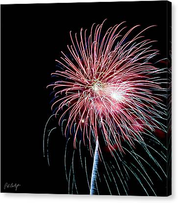 Wild Sky Flower Canvas Print by Phill Doherty