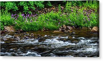 Wild Sweet Williams River Canvas Print by Thomas R Fletcher