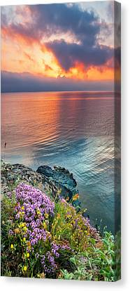 Wild Thyme By The Sea Canvas Print by Evgeni Dinev