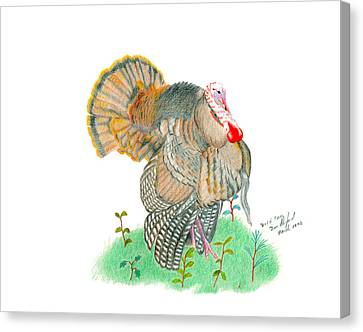 Wild Tom Canvas Print by Daniel Shuford