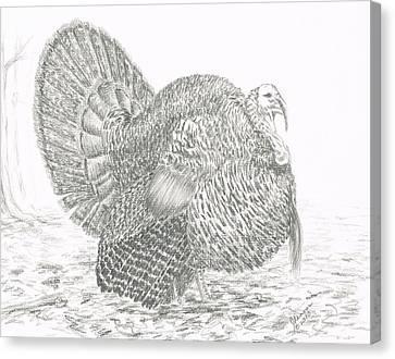 Wild Tom Turkey Canvas Print by Joann Renner