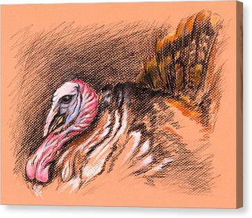 Wild Tom Turkey Canvas Print by MM Anderson