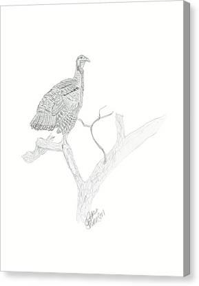 Wild Turkey Canvas Print by Sara Stevenson