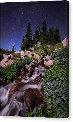 Wildflower Finale In The Indian Peaks Canvas Print by Mike Berenson