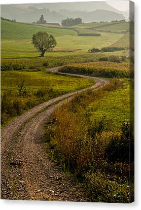 Willow Canvas Print by Davorin Mance