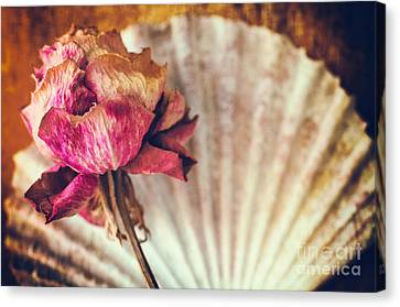 Wilted Rose And Shell Canvas Print by Silvia Ganora