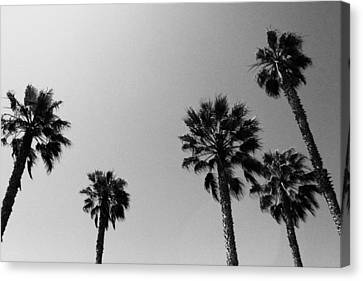Wind In The Palms- By Linda Woods Canvas Print by Linda Woods