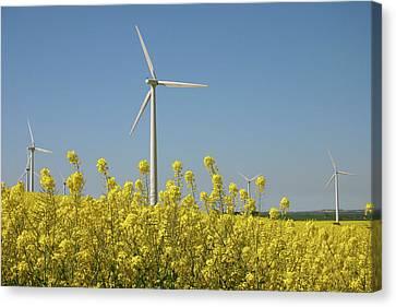 Wind Turbines Across A Field Of Flowering Oilseed Rape (brassica Napus) Canvas Print by Maria Jauregui Ponte