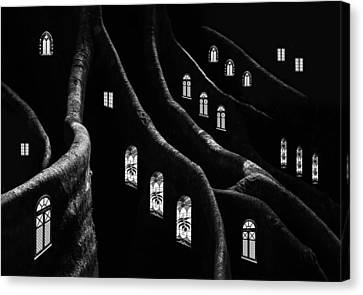 Windows Of The Forest Canvas Print by Jacqueline Hammer