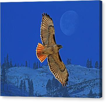 Wings Canvas Print by Donna Kennedy