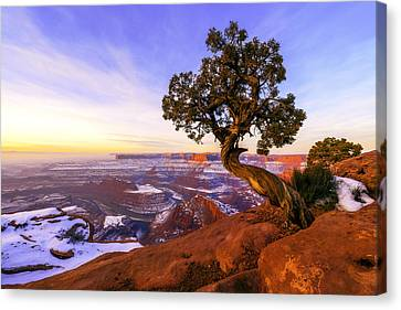 Winter At Dead Horse Canvas Print by Chad Dutson