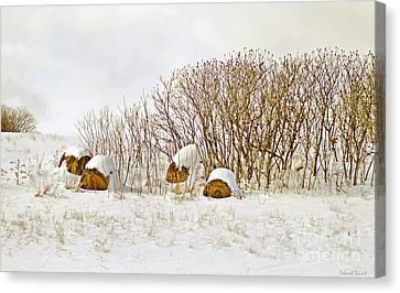 Winter Beauty Canvas Print by Deborah Benoit