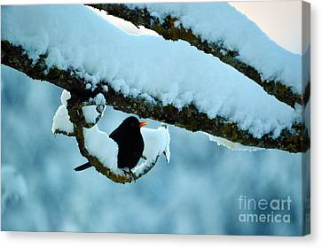Winter Bird In Snow - Winter In Switzerland Canvas Print by Susanne Van Hulst