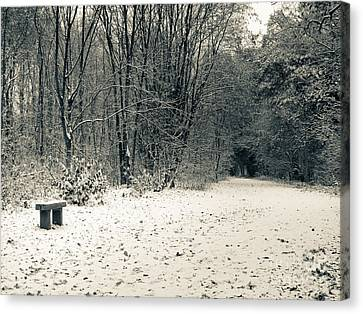 Winter Bridleway Canvas Print by Andy Smy