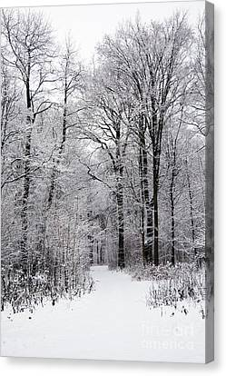 Winter In The Forest Canvas Print by Gabriela Insuratelu
