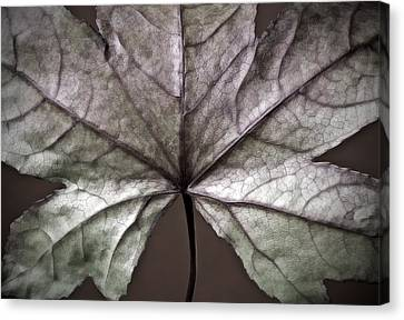 Winter Leaf Canvas Print by Artecco Fine Art Photography