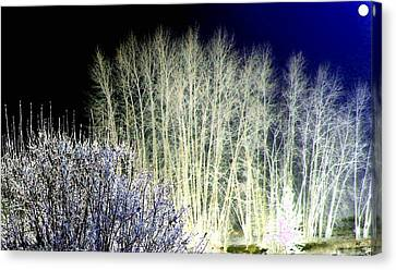 Winter Moonlight Canvas Print by Will Borden