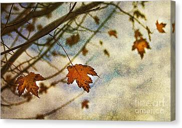 Winter On The Way Canvas Print by Rebecca Cozart