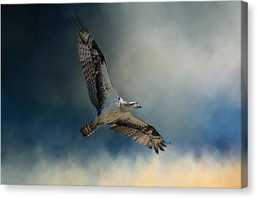 Winter Osprey Canvas Print by Jai Johnson
