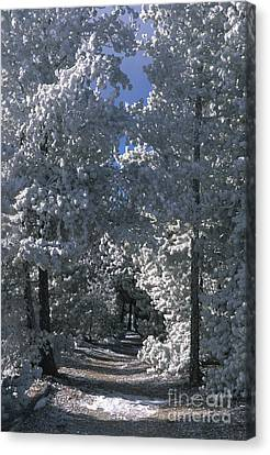 Winter Pathway Canvas Print by Sandra Bronstein