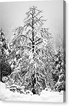 Winter Canvas Print by Racheal Christian