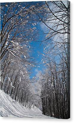 Winter Road Canvas Print by Evgeni Dinev